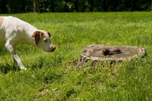 Paw-Pals-Pet-Sitting-Dog-Finds-Snake-300x199