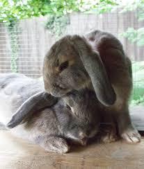Bunny-Paw-Pals (1)