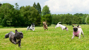 Dog-Park-Socialization-Paw-Pals-300x169