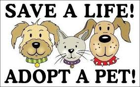 Paw-Pals-Adopt-a-Shelter-Pet