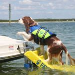 Paw-Pals-Boat-Safety