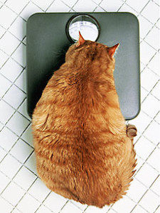 Paw-Pals-Cat-obesity-225x300