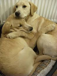 Paw-Pals-Comforted-Dog