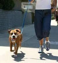 Paw-Pals-Dog-Walk