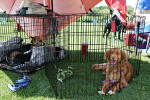 Paw-Pals-Dogs-Relaxing