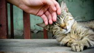 Paw-Pals-Kitty-Cuddles-600x338