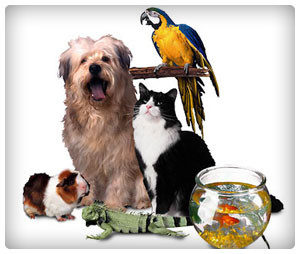 Paw-Pals-Moving-with-Pets-300x254