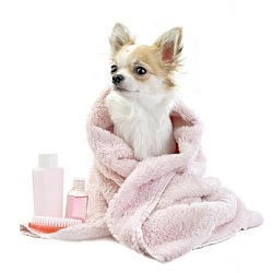 Paw-Pals-Pampered-Pooch