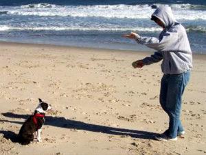 Paw-Pals-Pet-Sitting-Deaf-Dog-Training