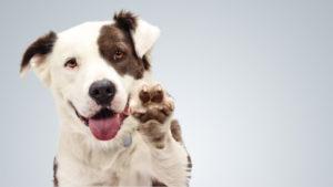 Paw-Pals-Pet-adoption-600x338