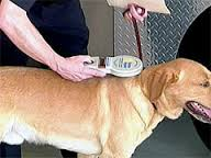 Paw-Pals-Scanning-a-microchip