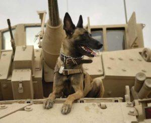 Paw-Pals-Service-dog-600x487