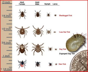 Paw-Pals-Tick-Identification-Chart