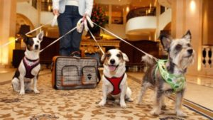 Paw-Pals-Traveling-with-Pets-600x338