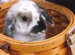 Rabbit-Paw-Pals-300x221 (1)