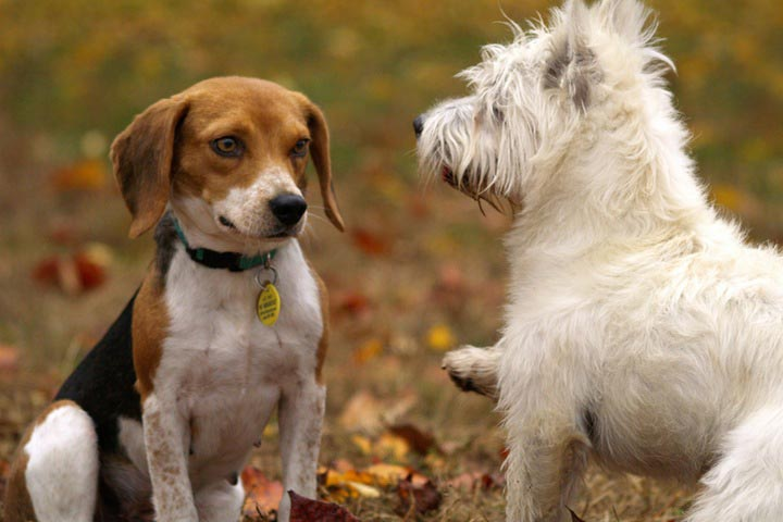 How to Introduce New Dogs to Other Pets