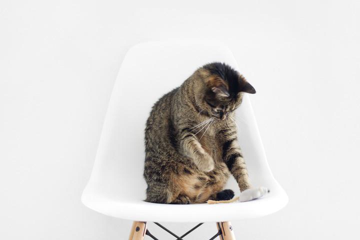 pet-care-games