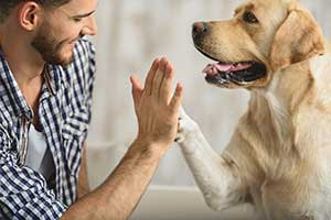 Preventing Heartworm Infection