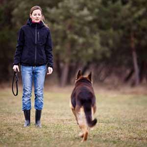 Discipline a dog