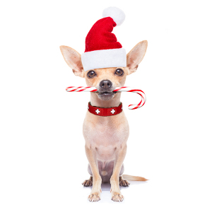 holiday treats for your dogs candy canes