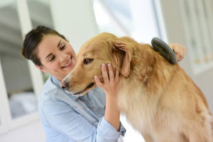 holiday treats for your dogs taking care