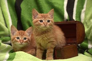 Kittens spayed or neutered.jpg
