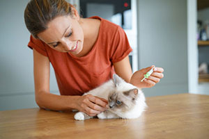 Pet sitter performing Centreville, VA cat sitting services