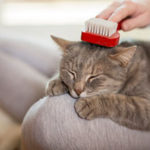 Woman brushing a cat