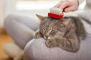 Woman brushing a cat