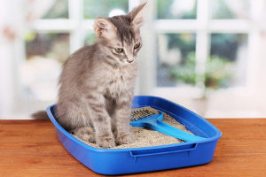 cat provided with a clean litter box
