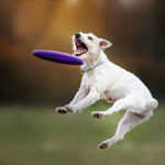 Dog playing in Northern Virginia dog park