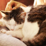 Northern VA cat sitting service specialist caring for a cat