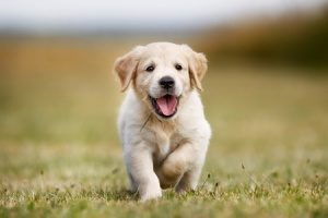 puppy running and learning how to be potty trained