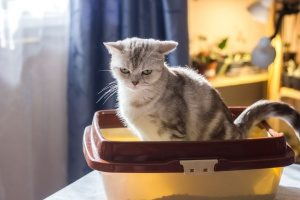 a cat using a litter box provided by one of the best Fairfax, VA cat sitting services