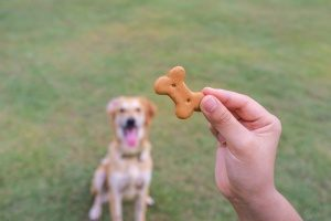 dog owner who read about tips to stop your dog from barking and is holding a treat out for his dog