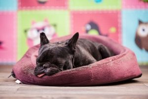 dog slumped in her bed that was provided by her pet sitting service