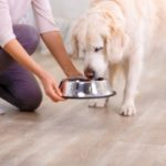 woman feeding her dog food made by one of the healthiest dog food brands