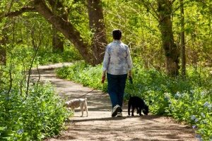 professional dog walking services walking two dogs whose owner is busy and on vacation