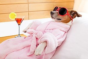 dog in a spa relaxing at one of the top dog friendly social events in Northern Virginia