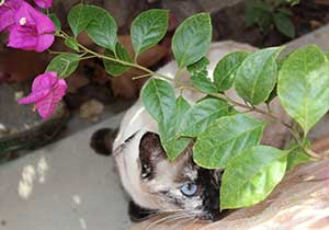 Cat playing with house plant that is poisonous