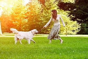 owner of a professional dog sitting and dog walking company training a dog with a stick so it can learn to play fetch