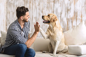a dog and his owner high fiving after dog sitting services trained the owner to keep better care of him