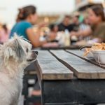 dog eating at a dog friendly restaurant