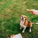 dog owner giving his dog one of the best treats to give your dog while walking