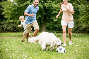 family playing games with dog at the park