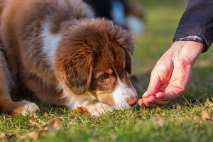 owner giving their dog one of the best dog treats to give your dog while walking