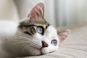 a cat whose owners are using pet technology to play with it