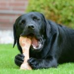 new puppy chewing on a fresh bone