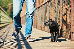 Man walking new puppy on bridge
