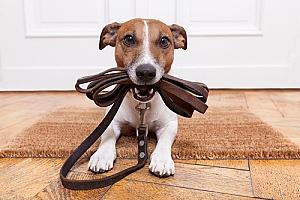 Puppy wants to walk